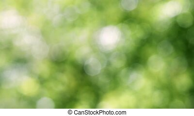 bokeh, vert, naturel