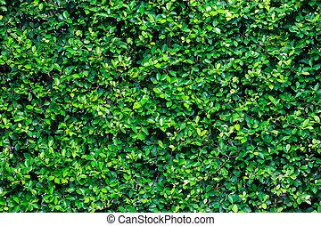bokor, zöld, kert, struktúra