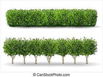 bokor, zöld, sövénykerítés, forma