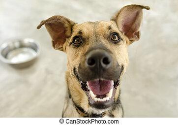bol, chien, heureux