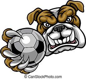 bola, buldogue, futebol, segurando, futebol, mascote