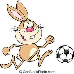 bola futebol, tocando, coelho