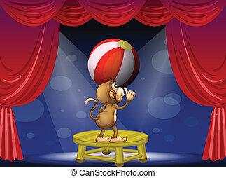 bola, macaco, tocando