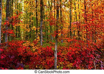 Bold Fall Foliage - Vivid fall colored foliage in a woodsy...