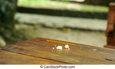Bold sparrow bird eats bread crumbs on a restaurant table. ...