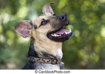 boldog, nevető, kutya
