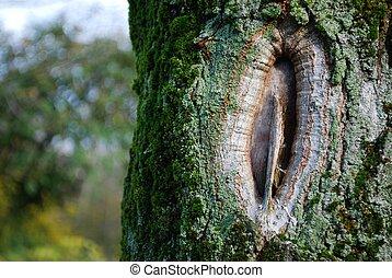 Bole hole detail on a tree covered with moss
