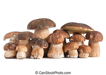 Boletus Edulis mushrooms - group of Boletus Edulis mushroom...