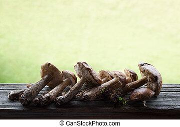 Boletus mushrooms and aspen mushrooms