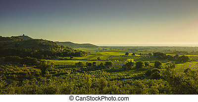 Bolgheri and Castagneto vineyard aerial panorama on sunset. Maremma Tuscany, Italy