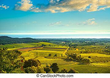 Bolgheri and Castagneto vineyard aerial view on sunset. Maremma Tuscany, Italy