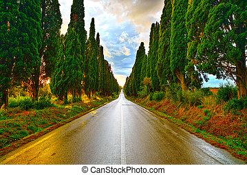 Bolgheri famous cypresses tree straight boulevard on sunset....