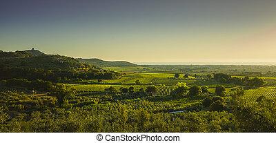 bolgheri, y, castagneto, viña, aéreo, panorama, en, sunset., maremma, toscana, italia