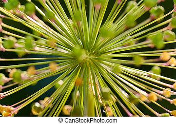 boll of decorative onion