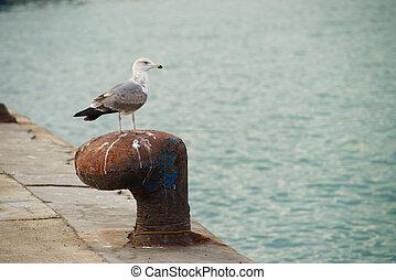 Bollard on the dock of a fishing harbor