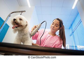 bolt, nő, egészséges, kutya, haj, kedvenc, beállítás