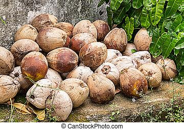 bolyhos, nagy, gyümölcs, cölöp, closeup, kókuszdió, háttér, egész, tropikus, barna