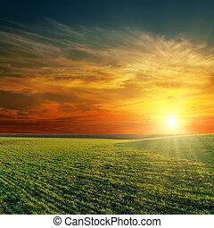 bom, pôr do sol, sobre, campo verde