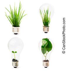 bombilla, crecer, planta, dentro
