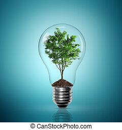 bombilla, dentro, árbol, luz