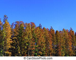 bomen, achtergrond, hemel, levendig, blauwe