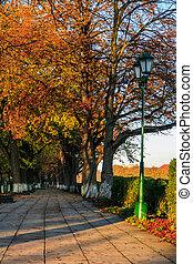 bomen, gedraaide, gele, op, morgen, herfst, steegje