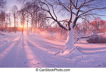 bomen, ijzig, zonlicht, morgen