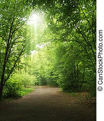 bomen, in, een, zomer, bos