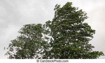 bomen, in, sterke, wind