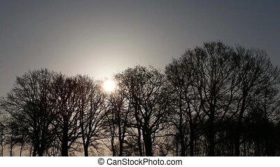 bomen, in, winter zon