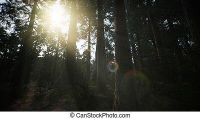 bomen, reus, californië, summertime, park, nationale, ...