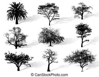 bomen, silhouette