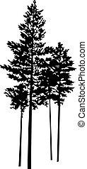 bomen, silhouette, weinig, dennenboom