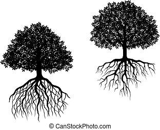 bomen, vrijstaand, wortels