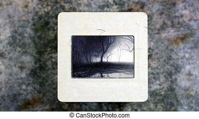 bomen, weerspiegelen, in het water, op, ouderwetse , glijd...