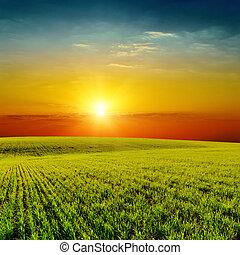 bon, printemps, sur, champ, vert, orange, coucher soleil