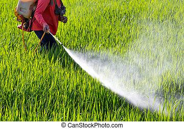 bonde, besprutning, insektsmedel, in, den, risgryn gärde