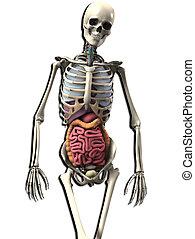 Bone And Guts