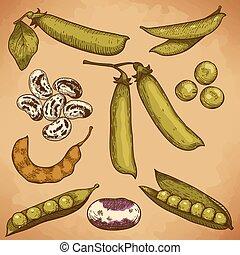 bonen, erwtjes, illustratie