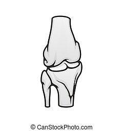 Bones joints, skeleton anatomy vector