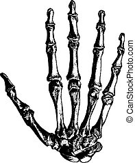 Bones of the hand, vintage engraving. - Bones of the hand,...