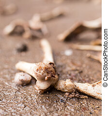 bones on the ground
