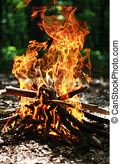a bright fire in the woods