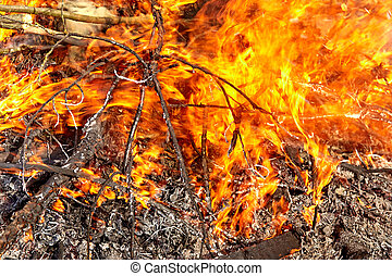 Bonfire closeup. Ignite the fire. Burning branches and wood...