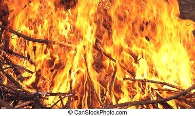 Bonfire flames of camping fire