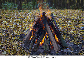Bonfire in the autumn forest