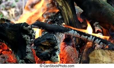 Bonfire in the forest. Fire flames lick firewood