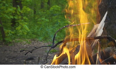 bonfire with burning log in the forest, slow motion