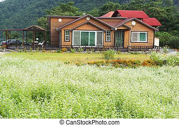 bongpyeong, sud, festival, corée, pensions, sarrasin