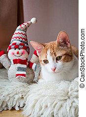 bonhomme de neige, emplacement, rouges, chat